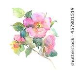 roses hips flowers garland ... | Shutterstock . vector #457801519