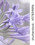 Artistic Fine Art African Lily...