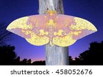 A male Imperial Moth (Eacles imperialis) under a starry night sky.