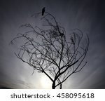 Silhouette Of A Solitary Black...