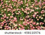 pink flowers garden  pattern | Shutterstock . vector #458110576