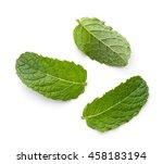 Fresh Green Mint Leaves...