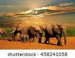 African Elephant Herd ...