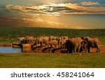 Troop  Herd Of Elephant ...