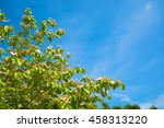 blossoming tree branches on... | Shutterstock . vector #458313220
