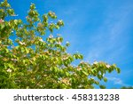 blossoming tree branches on... | Shutterstock . vector #458313238