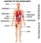 diagram showing anatomy of... | Shutterstock .eps vector #458358346