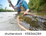 closeup of brown trout being... | Shutterstock . vector #458366284
