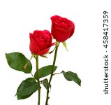 Stock photo beautiful red rose flowers isolated on white background 458417359