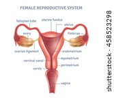 uterus medical poster with... | Shutterstock .eps vector #458523298
