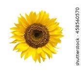bright yellow sunflower... | Shutterstock . vector #458560570
