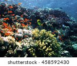 the coral reef on the sand...   Shutterstock . vector #458592430