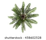 coconut tree top view isolated... | Shutterstock . vector #458602528