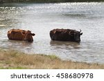 cows during the unbearable heat ... | Shutterstock . vector #458680978