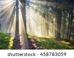 Foggy morning mist filled the grove alpine trees in the wild forests of the Ukrainian Carpathians. Golden sunrise rays on the beautiful background of wet pine needles, moss, mountain trails - stock photo