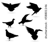 vector collection of bird... | Shutterstock .eps vector #458801146