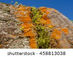 close up yellow on rock 1 | Shutterstock . vector #458813038