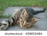 Small photo of kitten,tabby cat,young mammal