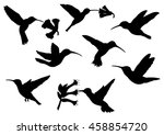 Set Of Colibri Silhouettes   ...