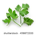 fresh green parsley leaves... | Shutterstock . vector #458872333