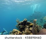 small fish on a shallow water... | Shutterstock . vector #458898460