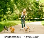 Stock photo woman walking dogs in park 459033304