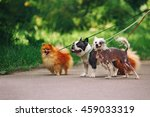 Stock photo walking dogs in park 459033319