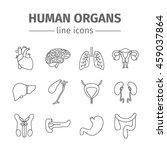 human organs. internal organs.... | Shutterstock .eps vector #459037864