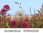 Beach Background With Dandelion