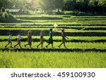 scouts parade in the cornfield... | Shutterstock . vector #459100930