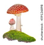 Two Fly Agarics In Green Moss...