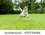 Stock photo dog running with tennis ball in mouth on camera 459254686