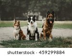 Three Dog Sitting Together...