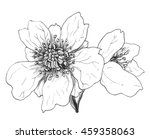 white anemone flowers isolated... | Shutterstock . vector #459358063