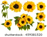 A Set Of Photos Of Shiny Yello...