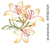 orange lily. hand drawn... | Shutterstock .eps vector #459382324