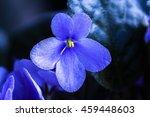 Home Violet Flower Under Direc...