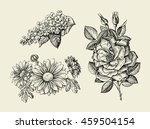 flower. hand drawn sketch... | Shutterstock .eps vector #459504154