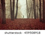 autumn park in dense fog with... | Shutterstock . vector #459508918