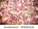blossoming of magnolia flowers... | Shutterstock . vector #459664126