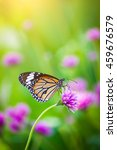 Butterflies In The Garden...
