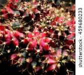 gymnocalycium cactus | Shutterstock . vector #459680233