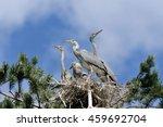 Four Grey Heron  Ardea Cinerea...