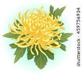Yellow Chrysanthemum Flower...