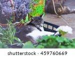 sleeping cat in a box in a...   Shutterstock . vector #459760669