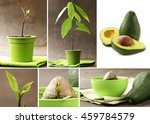 collage how to grow avocados at ... | Shutterstock . vector #459784579