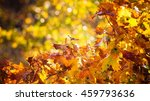bright autumn leaves in the... | Shutterstock . vector #459793636
