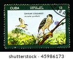 "Small photo of CUBA - CIRCA 1976: A postage stamp printed in the Cuba shows image the life of birds, the bird ""GAVILAN COLILARGO Accipiter gundlachi"", circa 1976"