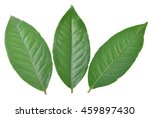 green tea leaf isolated on... | Shutterstock . vector #459897430