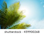 Palm Branch In Sunny Weather O...